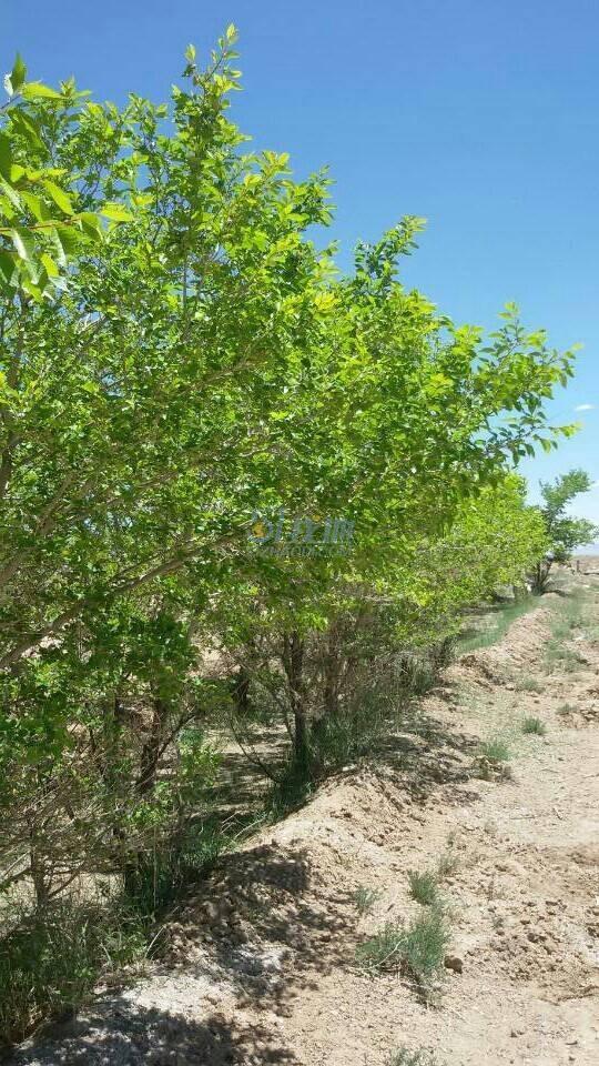 青海省海西州德令哈市5万亩耕地转让